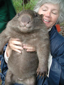 想養一隻Wombat